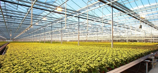 Выращивание дорогих растений как бизнес 51